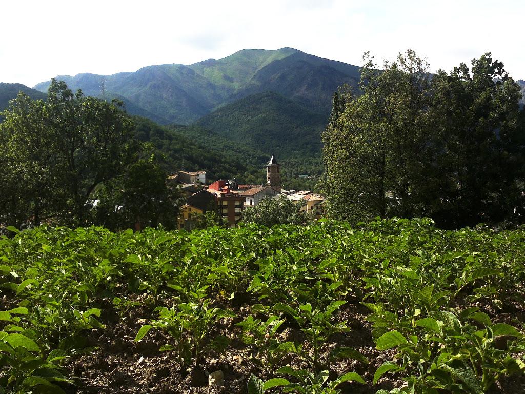 carnisseria-porte-estop-vilaller-pirineu-pirineo-ribagorça-botiga-trumfes-proximitat-patates-tradicionals-05