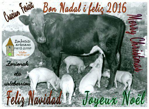 Vaca donant llet als garrins 1959